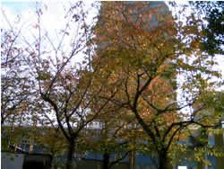 東京で晩秋を見つけました