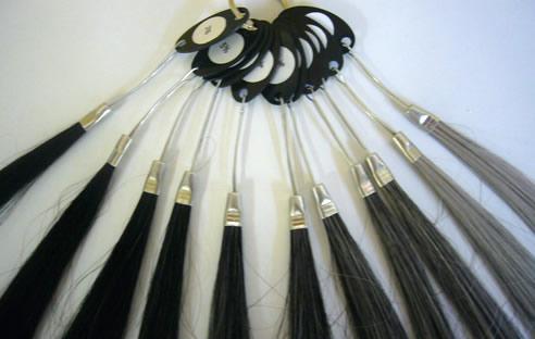 白髪の割合見本髪束